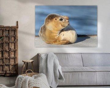 zeehond van Benno van Triest