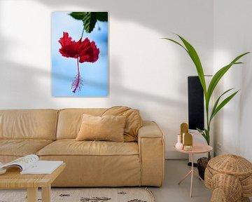 Rode hibiscus in tropisch Bali