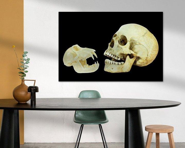 Sfeerimpressie: Echte schedels van mens en aap geïsoleerd op zwarte achtergrond van Ben Schonewille