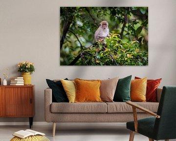 makaak, monkey in the jungle van Corrine Ponsen