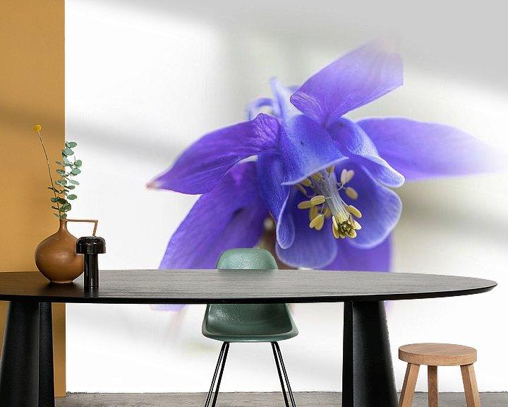 Beispiel fototapete: Aquilegia, lila von Ingrid Aanen