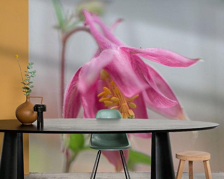 Beispiel fototapete: Aquilegia, rosa von Ingrid Aanen
