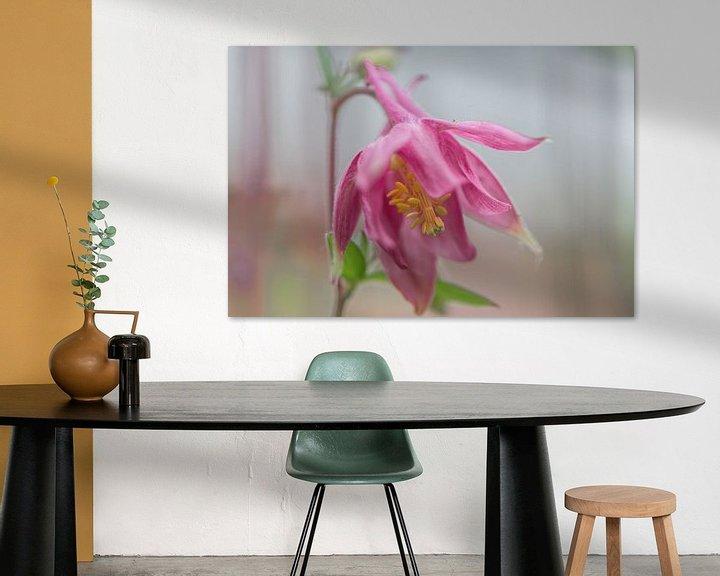 Beispiel: Aquilegia, rosa von Ingrid Aanen