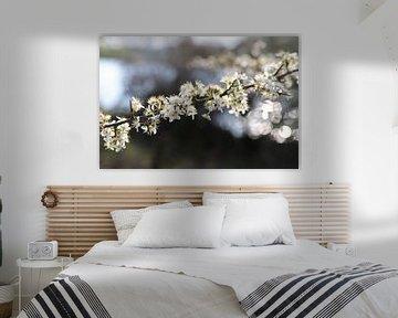 Voorjaarsbloesem in de Amsterdamse waterleidingduinen von Frans de Winter