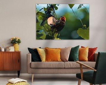 Klein vogeltje rustend op lampje van Dennis Kluytmans