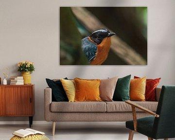 Vogel kijkend in de lens van Dennis Kluytmans