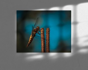 Libelle von Erica Kuiper
