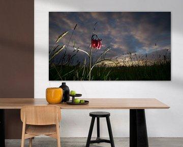 Wilder Regenpfeifer blüht bei Sonnenuntergang auf dem Gebiet von Fotografiecor .nl