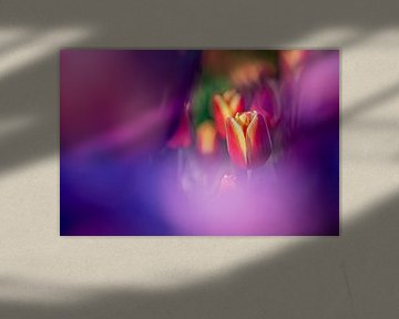 Rot mit gelber Tulpe zwischen violetten Blüten von Fotografiecor .nl