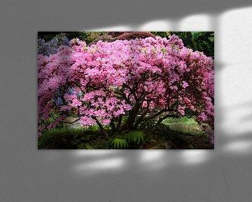 Roze boom von Chayenne Batenburg-Boom