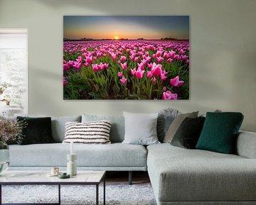 Tulpenfeld während des Sonnenuntergangs in Holland von Fotografiecor .nl