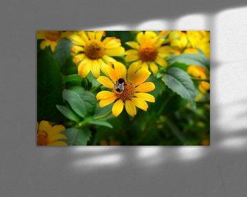 Gele bloemen met hommel von Ima Rhebok