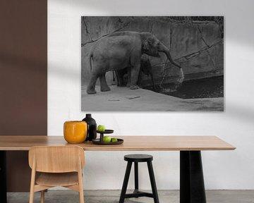 Olifanten spelen met water von Ima Rhebok
