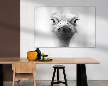 Struisvogel portret von Ima Rhebok