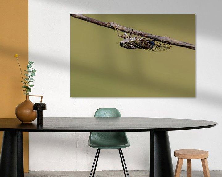 Sfeerimpressie: Provencaalse cicade ( Lyristes plebejus ) van Andrea de Vries
