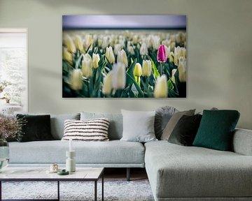 Paarse tulp in wit tulpenveld van Fotografiecor .nl