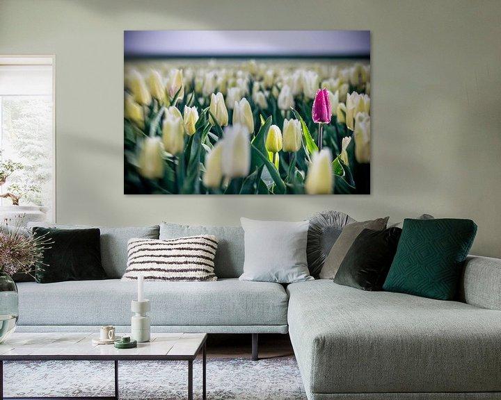 Sfeerimpressie: Paarse tulp in wit tulpenveld van Fotografiecor .nl