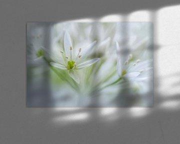 White beauty von Christl Deckx