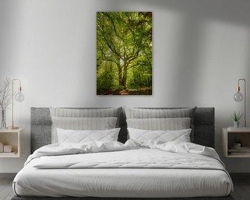Sprookjesboom van STYJL Fotografie