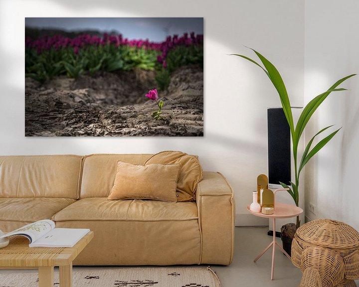 Sfeerimpressie: Uitgelichte tulp in het veld van Fotografiecor .nl