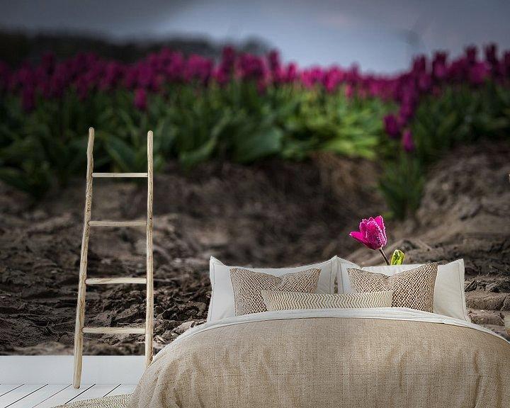 Sfeerimpressie behang: Uitgelichte tulp in het veld van Fotografiecor .nl