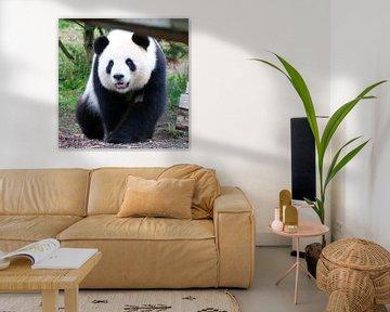 Panda_001_by_JAMFoto von Angelika Möthrath