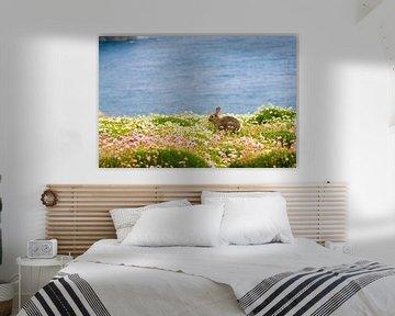 Konijn tussen de bloemen en met de blauwe oceaan op de achtergrond op Skomer eiland in Pembrokeshire von Ramon Harkema