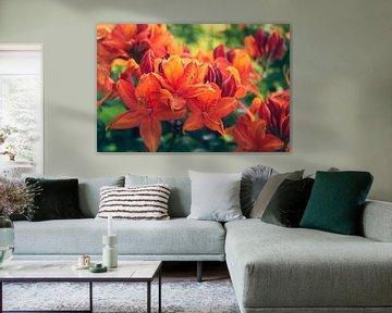 Oranje lelies in het stadspark van Breda von Deborah S