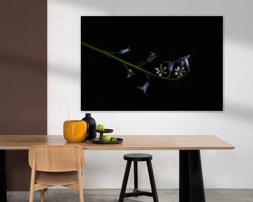 Hyacint in the dark von Elianne van Turennout