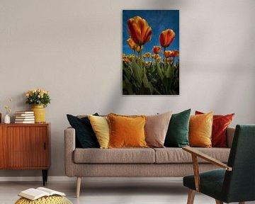 Orangegelbe Tulpen mit blauem Himmel von Marjolijn van den Berg