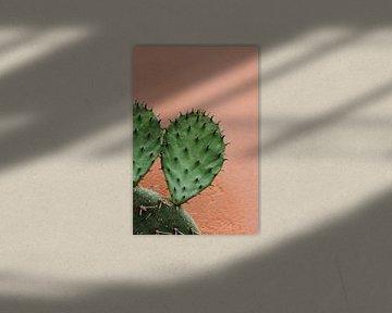 Kaktus gegen eine rosa Wand von Wianda Bongen