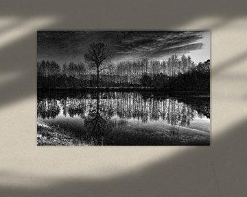 Bomen  in zwart-wit van Yvonne Blokland