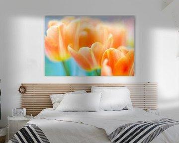 Tulpen von Jeannette Kliebisch