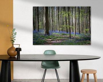 hyazinthen im Haller Wald von Adri Vollenhouw