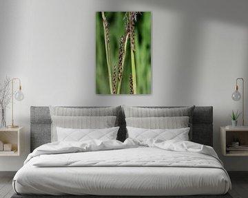 Bloeiend gras van Marlies Prieckaerts