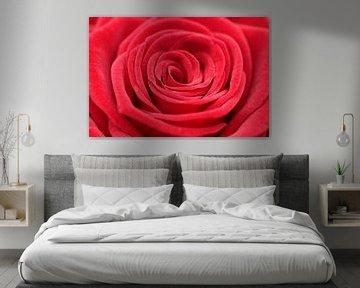 Rode roos von Sander Maas