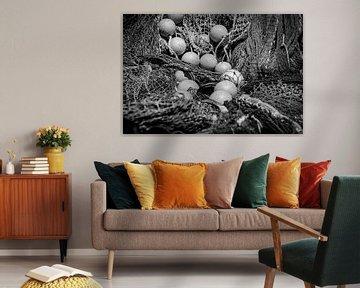 Hidden colours von BSO Fotografie