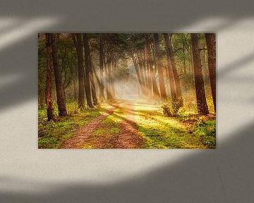 Zonnestralen in het bos van Joost Lagerweij