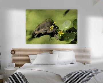 Gele dotterbloem op een stronk in een vijver von Cora Unk