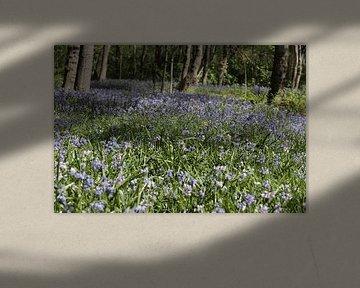 Een blauw tapijt met blauwe wilde hyacinten in een bos von Cora Unk