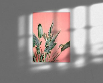 Grüne Palmblätter für eine rosa Wand von Raisa Zwart