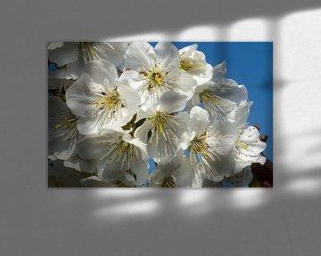 bloeiende kersenboom 2 van George Burggraaff