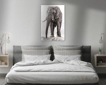 Mächtige Elefantenbulle von De Afrika Specialist