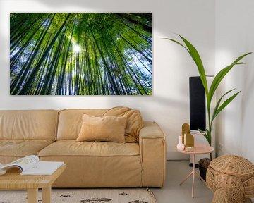 0620 Forêt de bambous