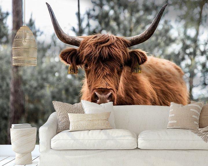 Beispiel fototapete: Stoere Schotse Hooglander von Miranda Snoeijen