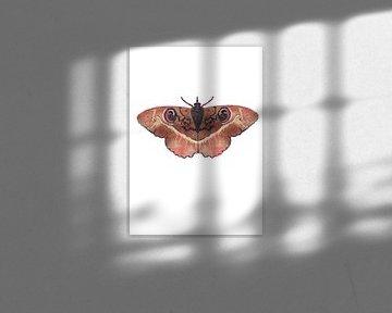 Motten-Terrafarbe auf weißem Hintergrund von Angela Peters