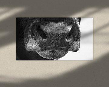 Neus van een stier in zwart/wit van Martijn van Dellen