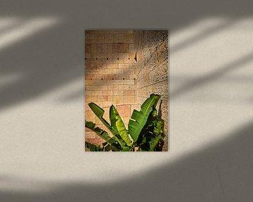 Bananenpflanze vor reliefartiger Mauer von Michael Moser