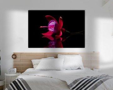 Fuchsia met spiegelbeeld van René van der Horst