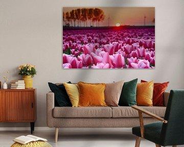 Roze tulpen 1